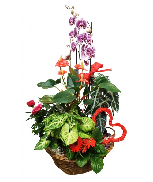 Kvetiny_ktere_vydrzi_doruceni_brno