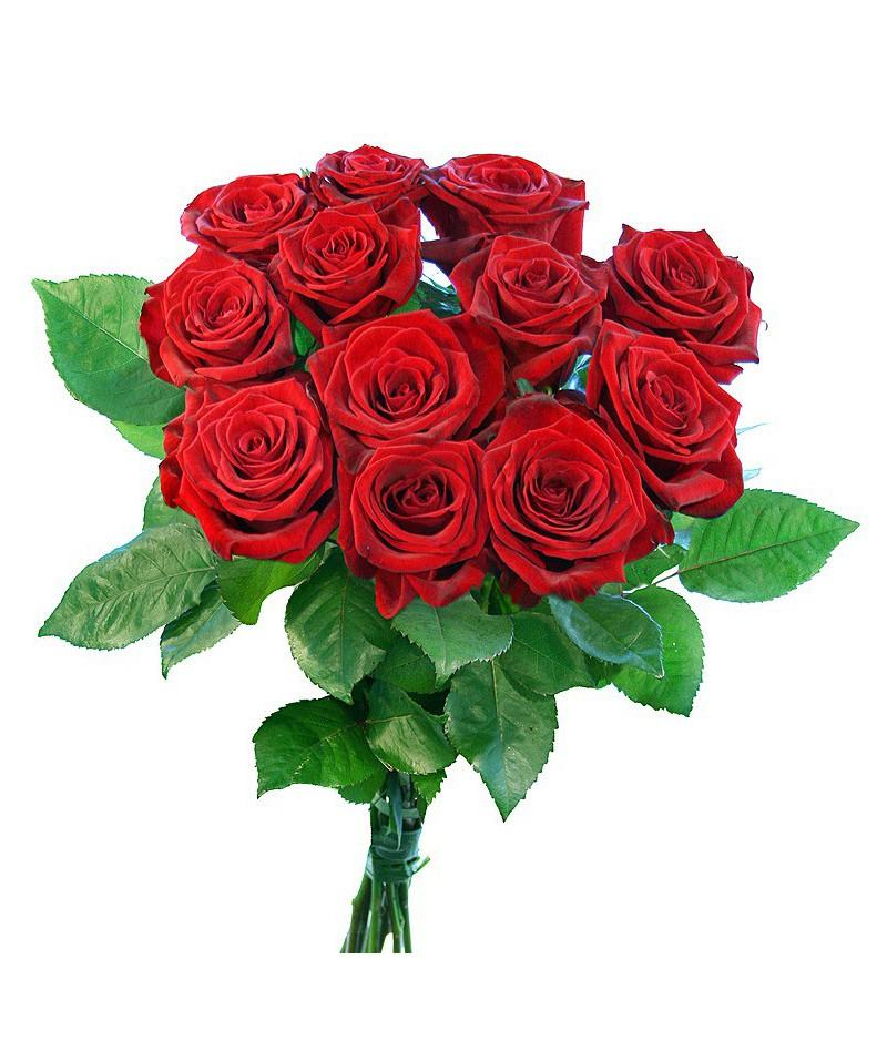 12 červených růží