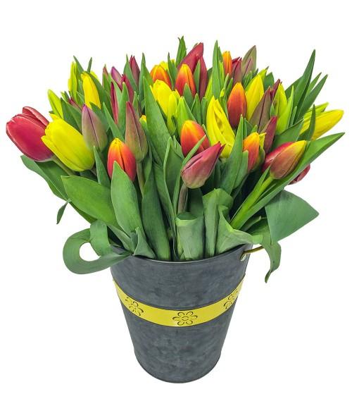 50 tulipánů mix