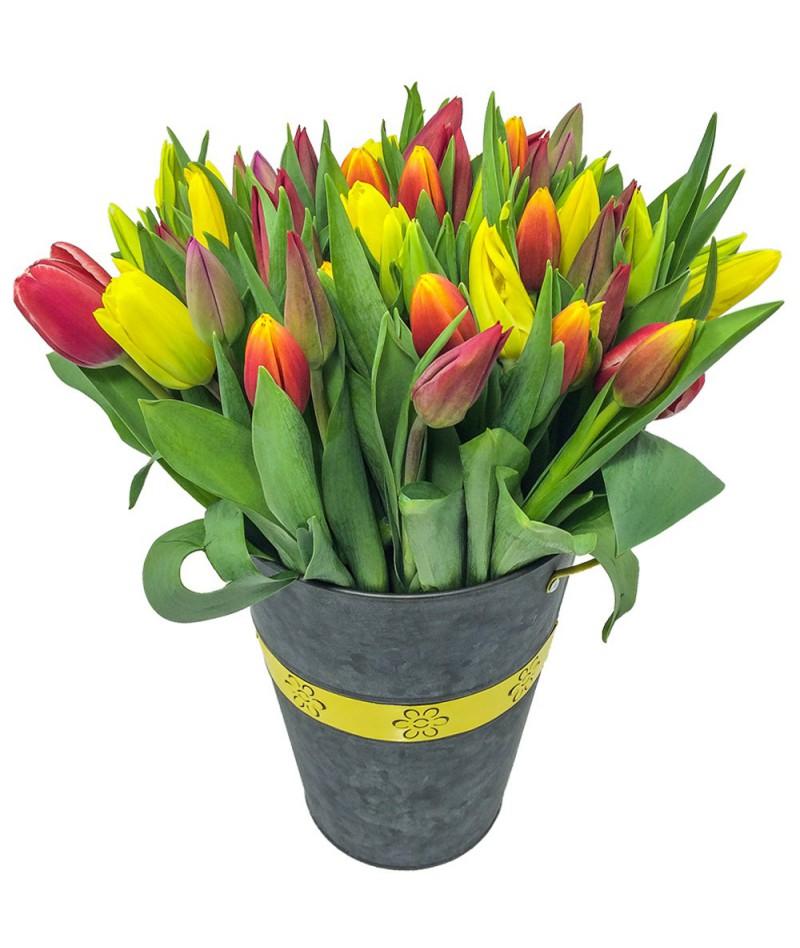 50-tulipanu-brno