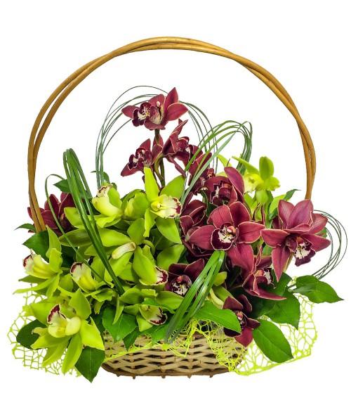 kos-orchideje-doruceni-brno