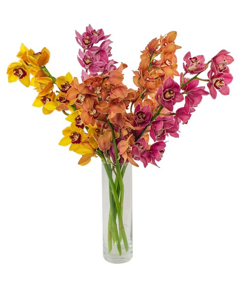 Orchidej cymbidium
