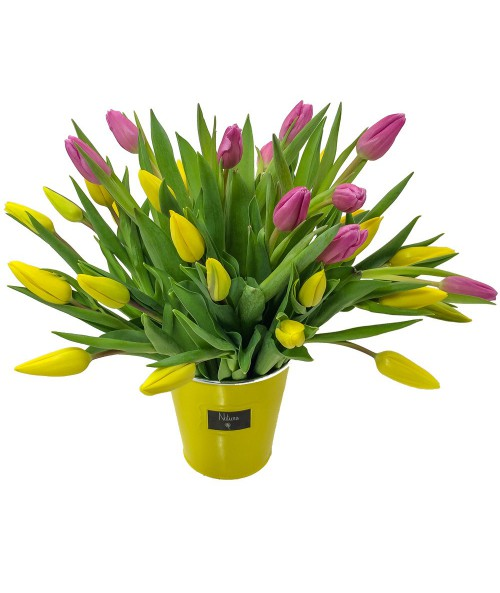 30 colourful tulips