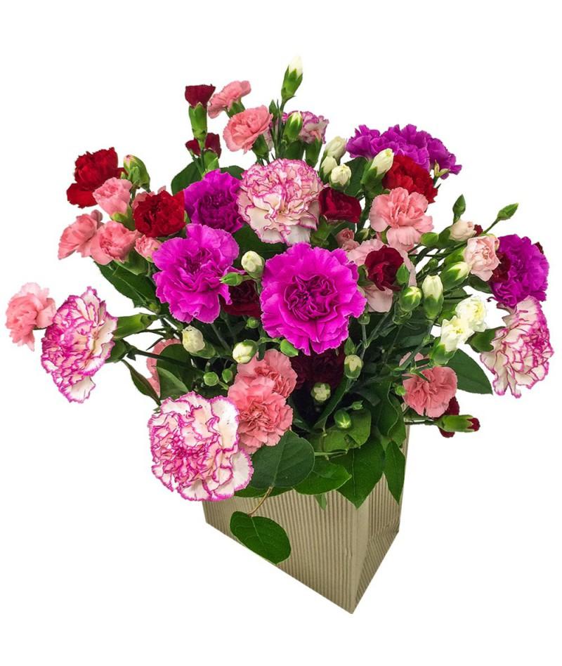 Magic carnations