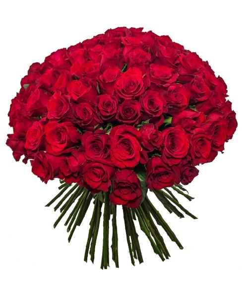 100 růží