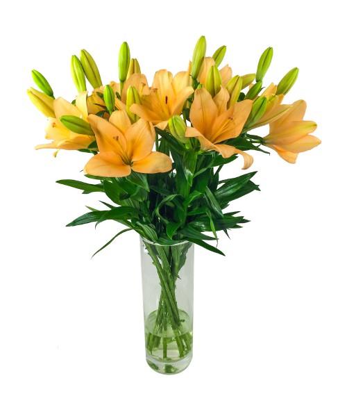 Obyčejné lilie