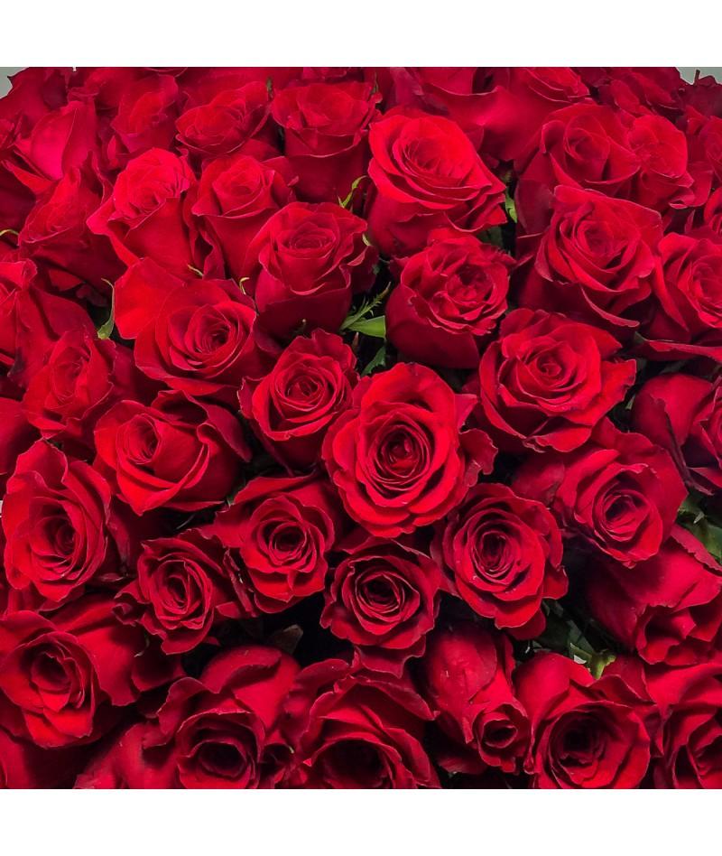 12 růží