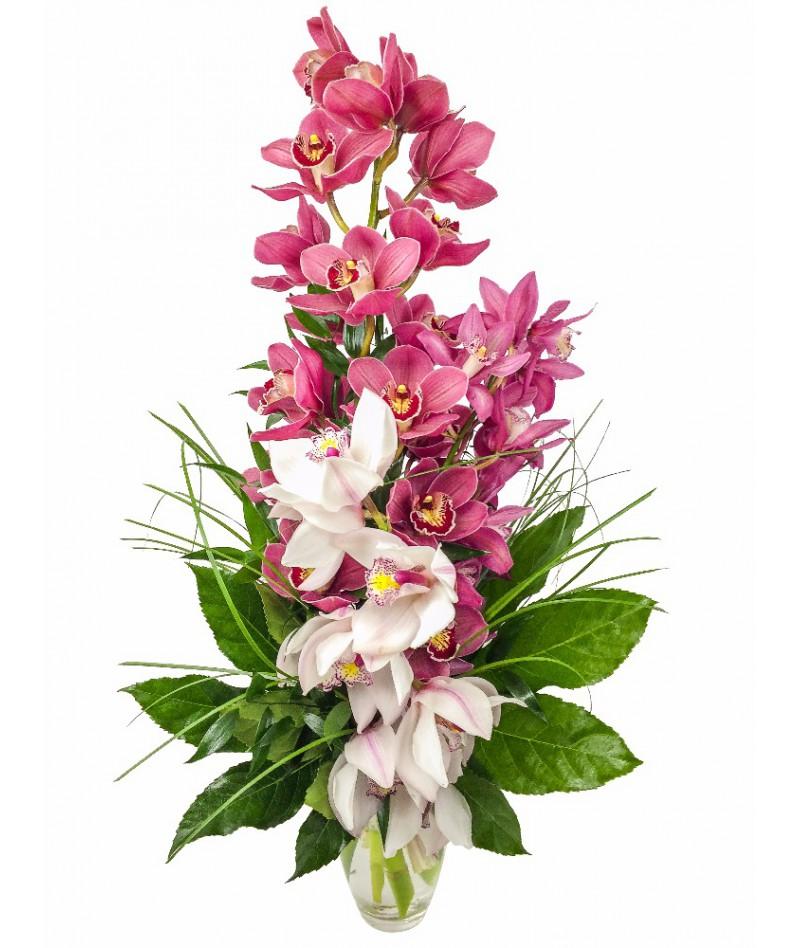 Vášnivá orchidej