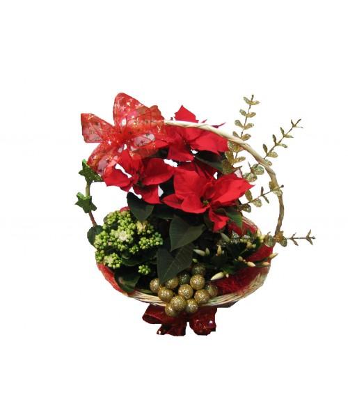 Vánoční rostliny