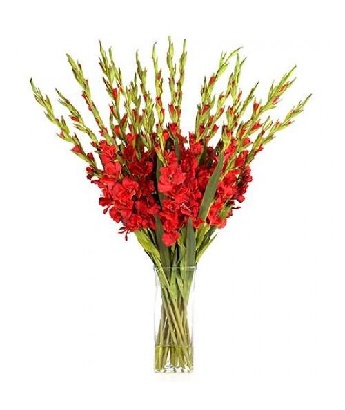 Gladiols
