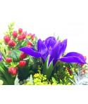 Extraordinary flowers