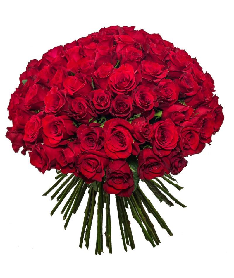 100 červených růží